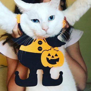 Happy Halloween 🎃 #川島旅館 #猫のいる宿 #猫温泉